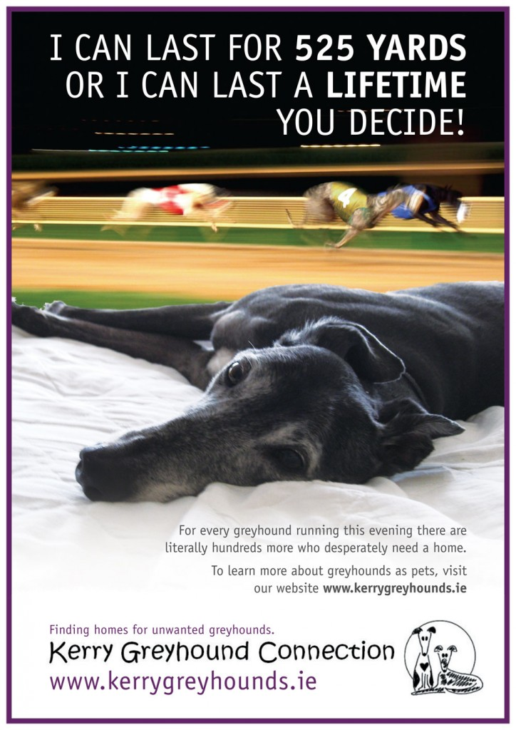 The first poster I designed for Kerry Greyhound Connection during my stay in Killarney