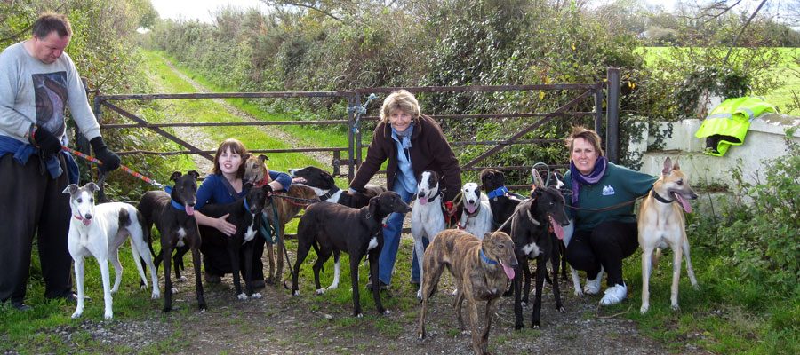 The KGC group volunteers on a walk with the kennel dogs