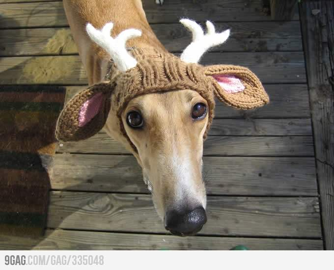 You may not NEED a reindeer hat for your greyhound, but that doesn't stop you from wanting one!