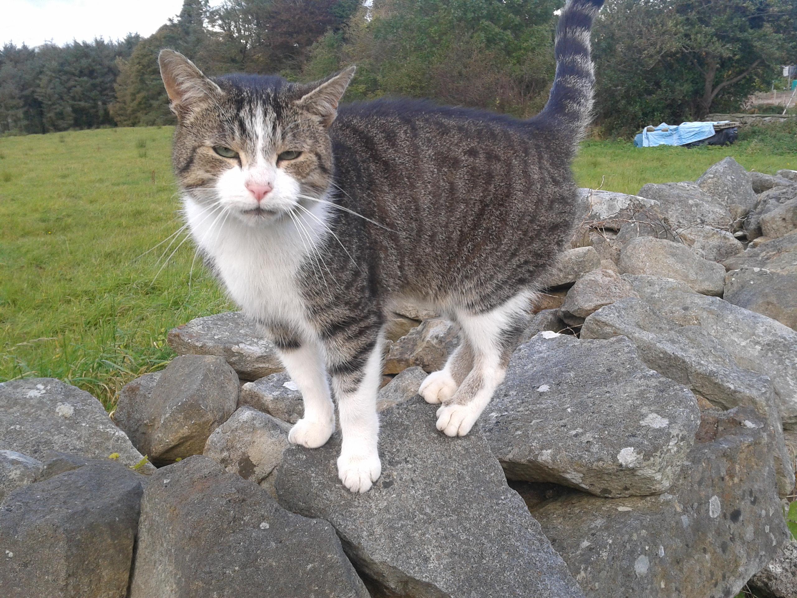 Meet Bob the Cat