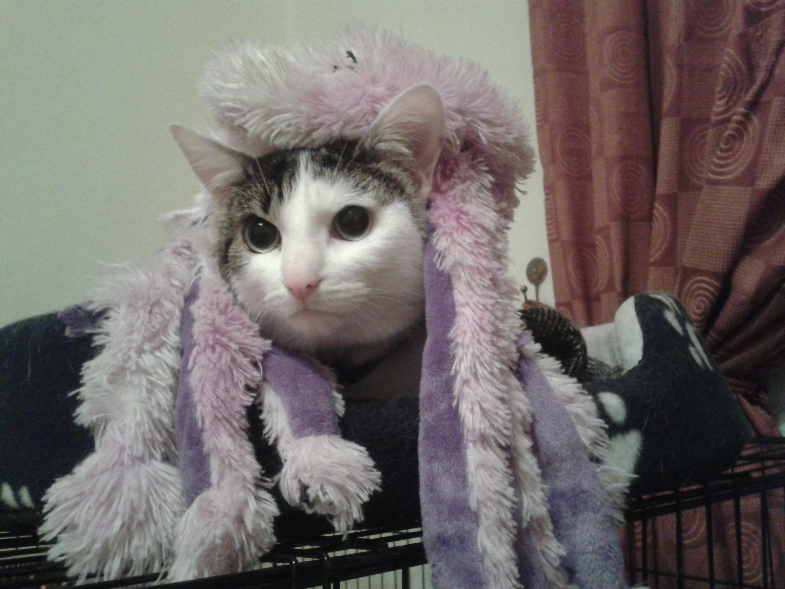 """Penny is not so impressed by her costume as the """"octo-pussy"""""""