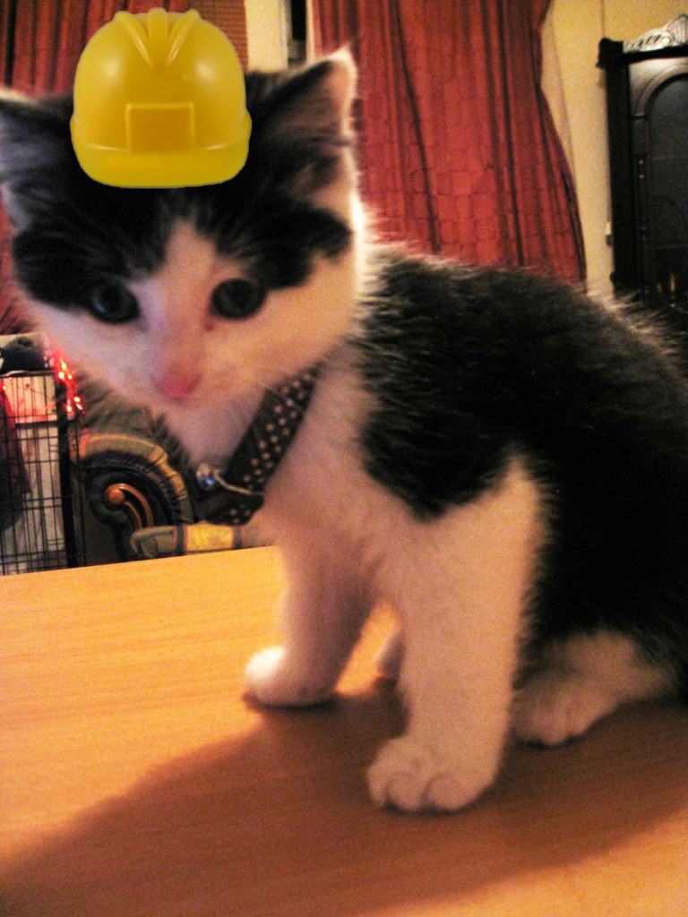 Sweet Pea says: Remember, safety first! Websites be dangerous territory...