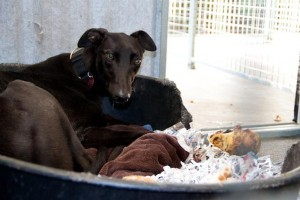 Nervous Annie will need a quiet home to help her come out of her shell